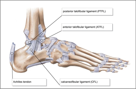 lateral ligament anatomy